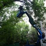 Спиливание аварийных деревьев с вышки. Валка и обрезка деревьев, Самара